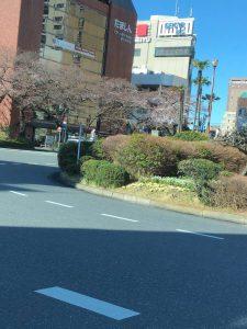 国立駅舎&桜咲き始めの様子